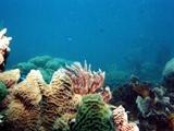 Подводный мир Кубы